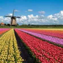 在荷兰旅行