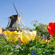 Виза в Голландию без головной боли