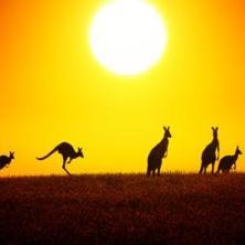 호주 유학에 대한 높은 만족도