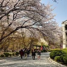 Đăng ký vào một trường Đại học Hàn Quốc