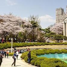 Güney Kore'de Bir Üniversiteye Nasıl Başvuru Yapılır?