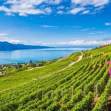 Изучение бизнеса и устойчивого развития в Швейцарии с SUMAS
